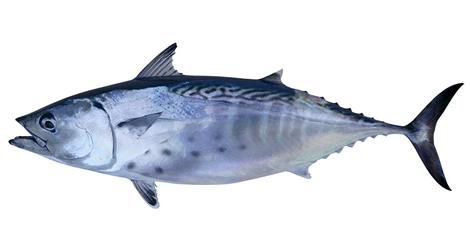 Murcia is already the fourth Spanish province to export fish